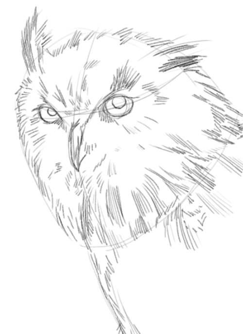 500x687 Easy Owl Pencil Drawings