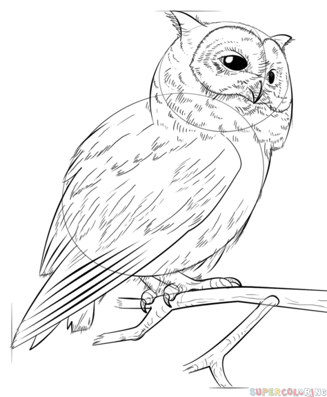 474x575 How To Draw A Realistic Owl Step By Step Drawing Tutorials
