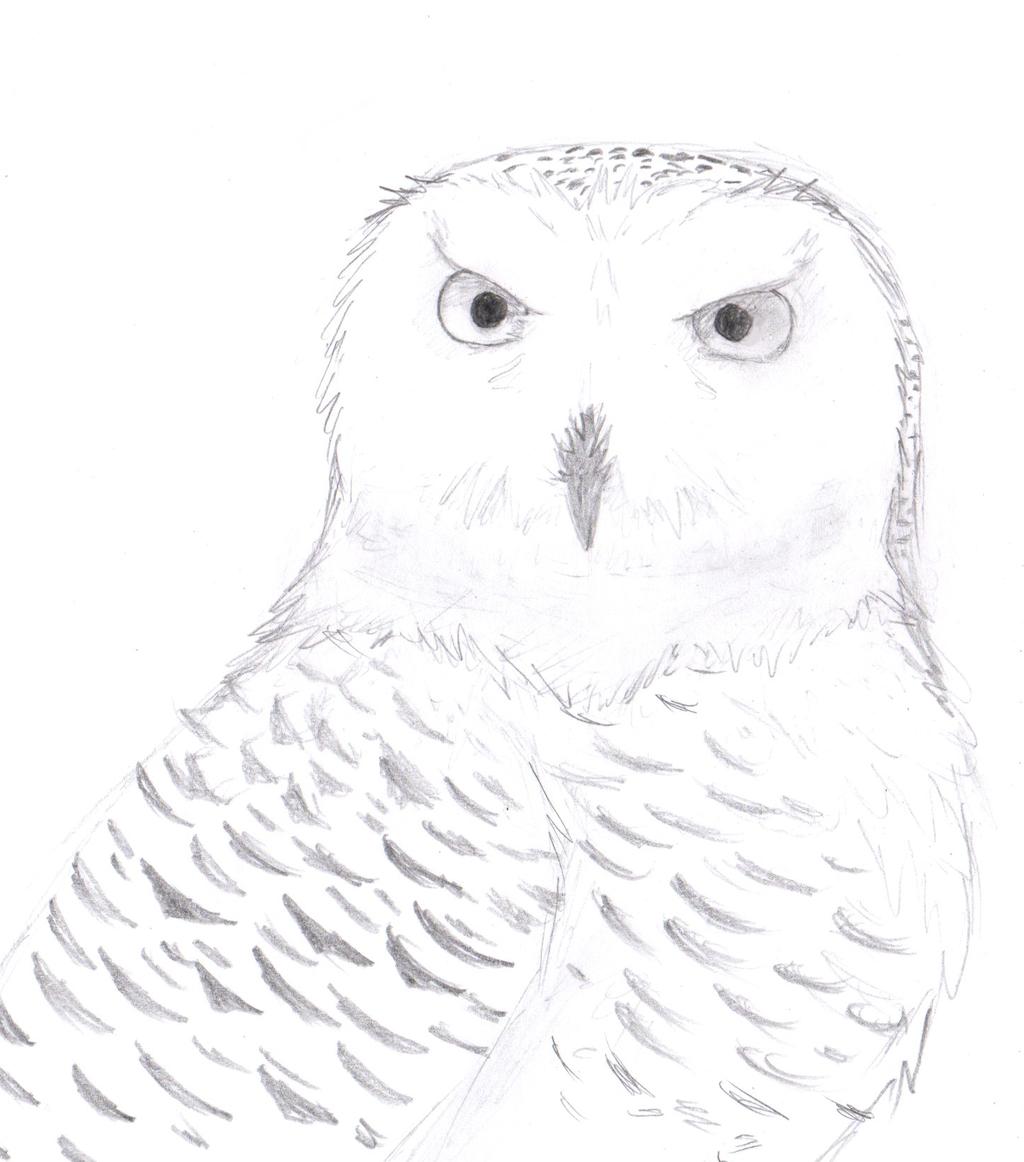 1024x1162 Snowy Owl By Sapphireclaw