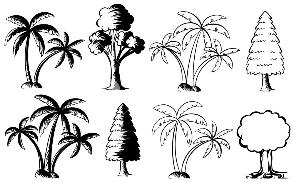 1000x619 Different Types Of Trees Illustration Royalty Free Stock Image