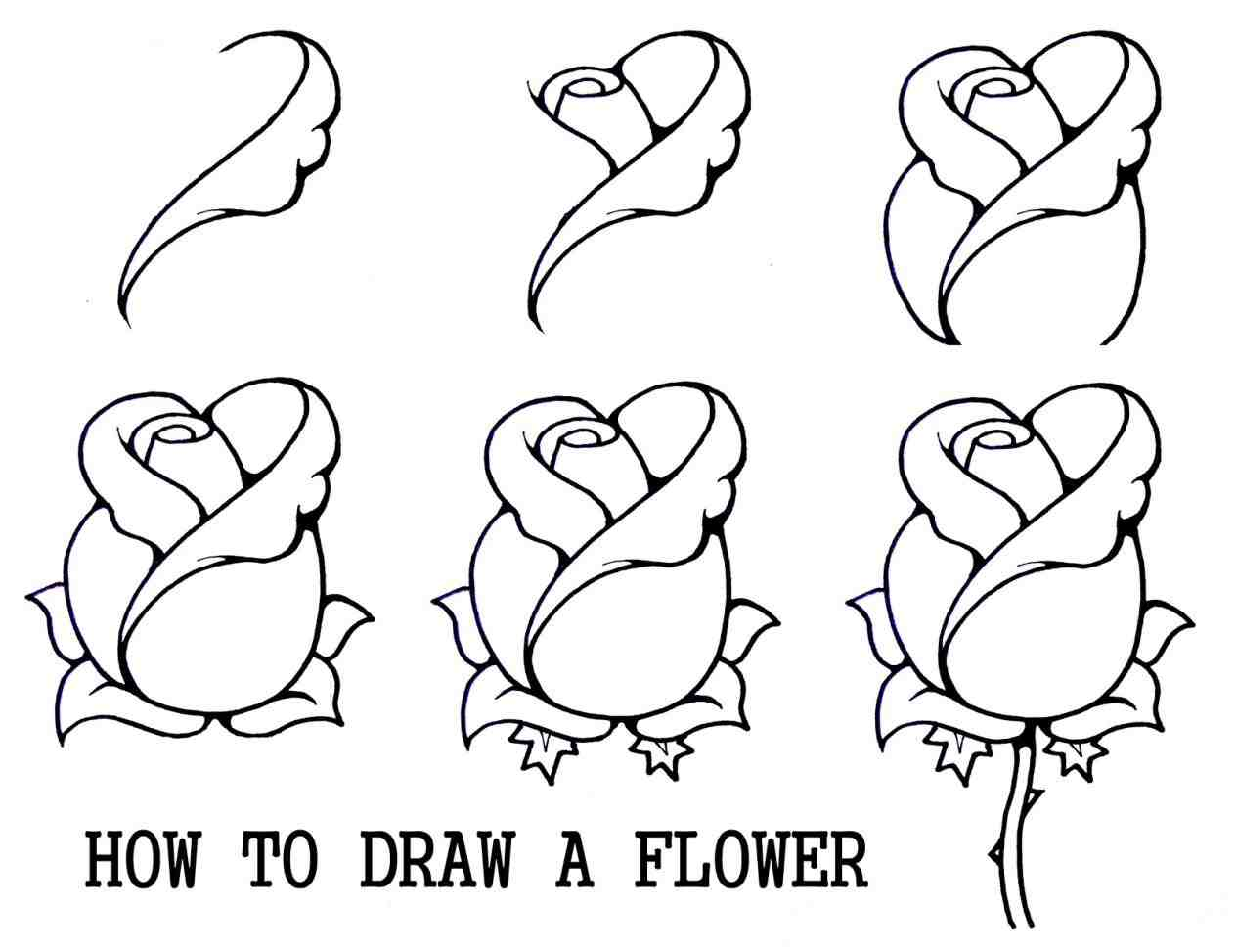 1264x973 The Images Collection Of For Easy Drawing Ideas Animals Beginners