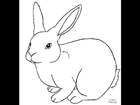 480x360 How To Draw The Rabbit, Draw The Rabbit, Easy 100%