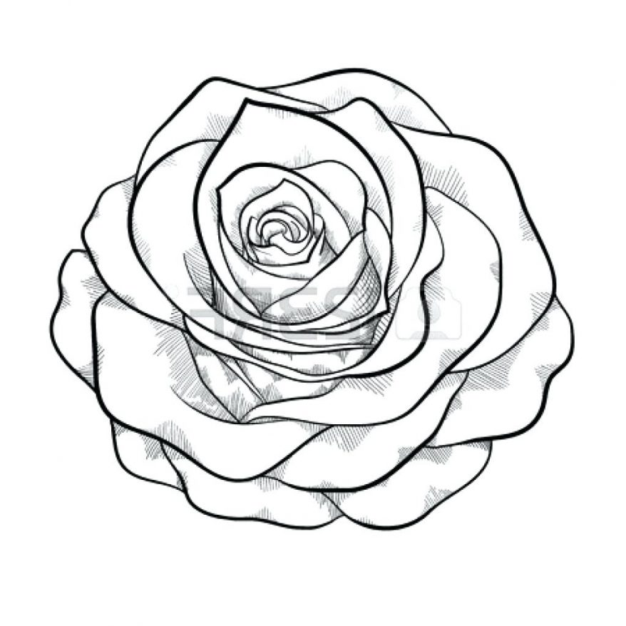 Easy Roses Drawing