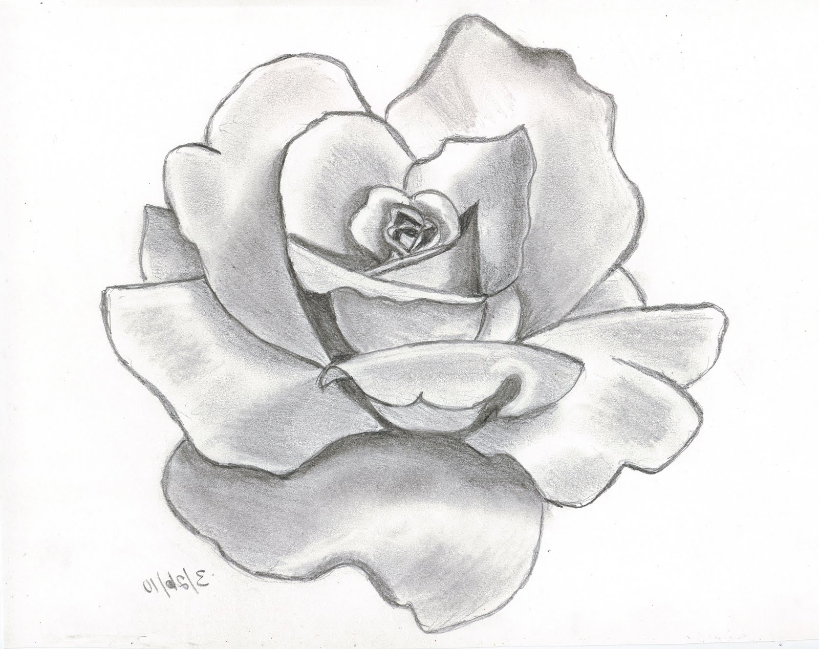 Easy Roses Drawing At Getdrawings Com Free For Personal Use Easy