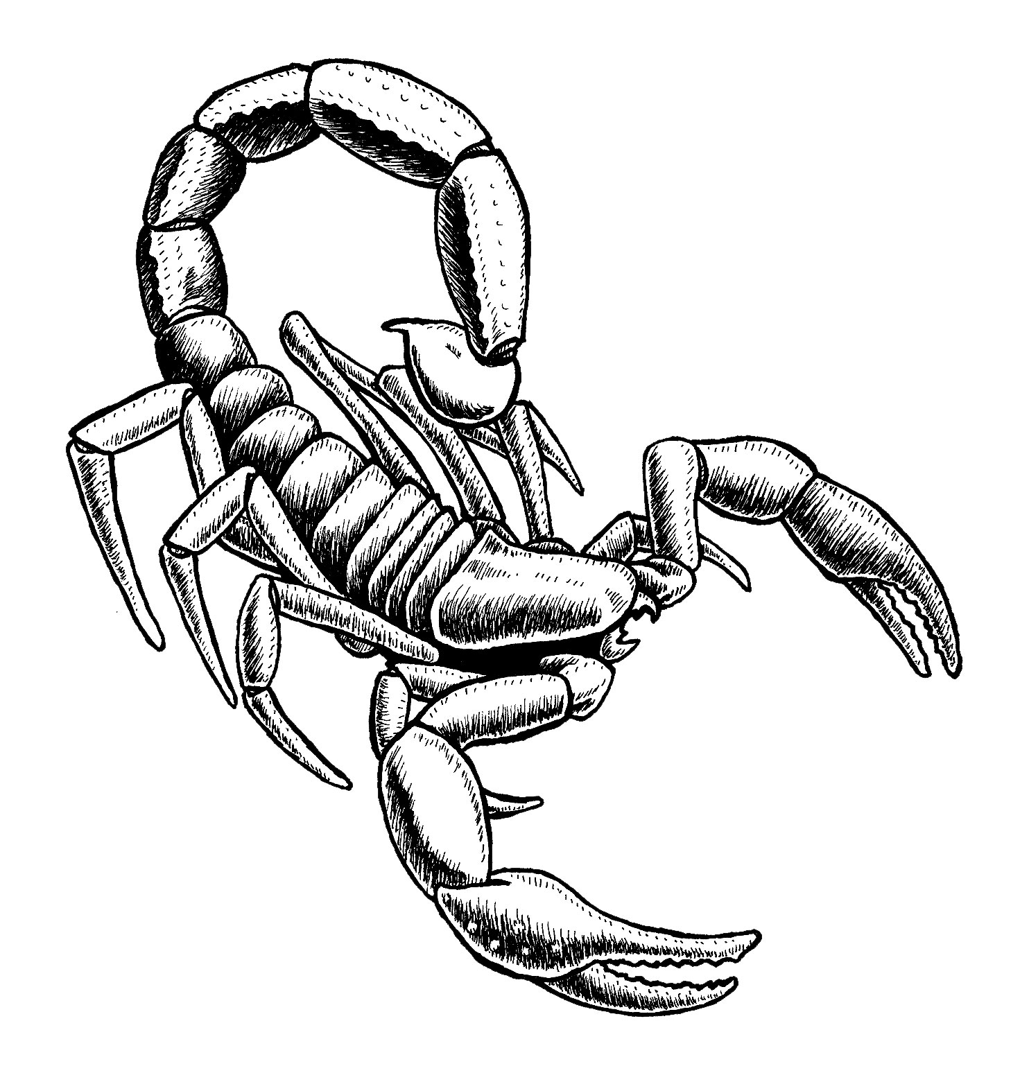 Easy Scorpion Drawing