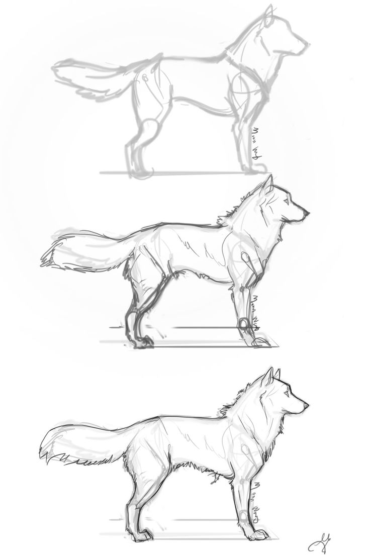 Easy Wolf Drawing Tutorial