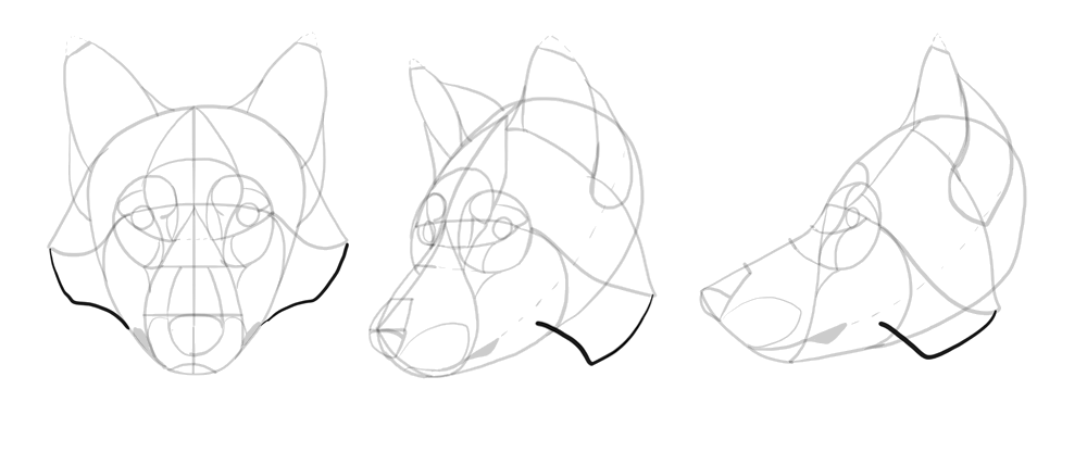 1000x416 how to draw a wolf head and shoulders knees and paws