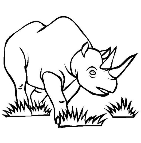 600x612 Rhino Eat Grass Coloring Pages Batch Coloring