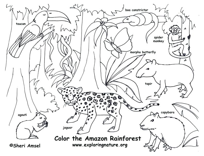 Ecosystem Drawing at GetDrawings.com | Free for personal use ...