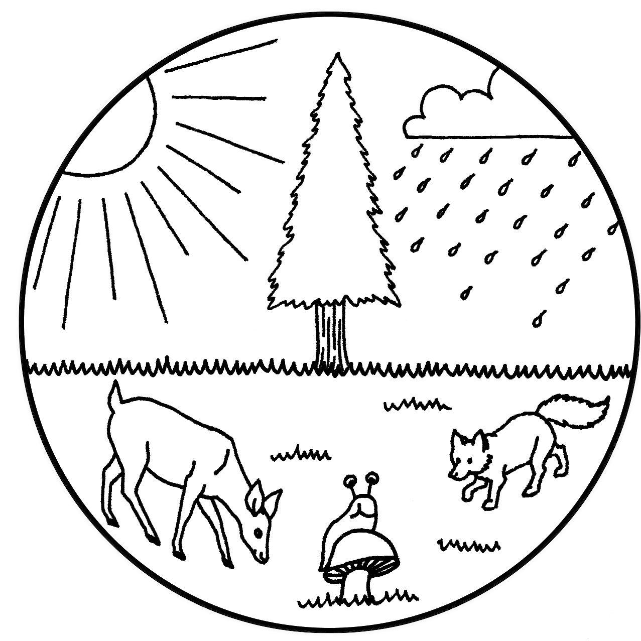 1277x1277 3. Illustrations Cynthia Linsenbardt Original Art