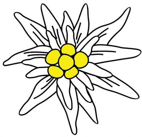 500x483 Edelweiss Decal Decals Esther's European Imports