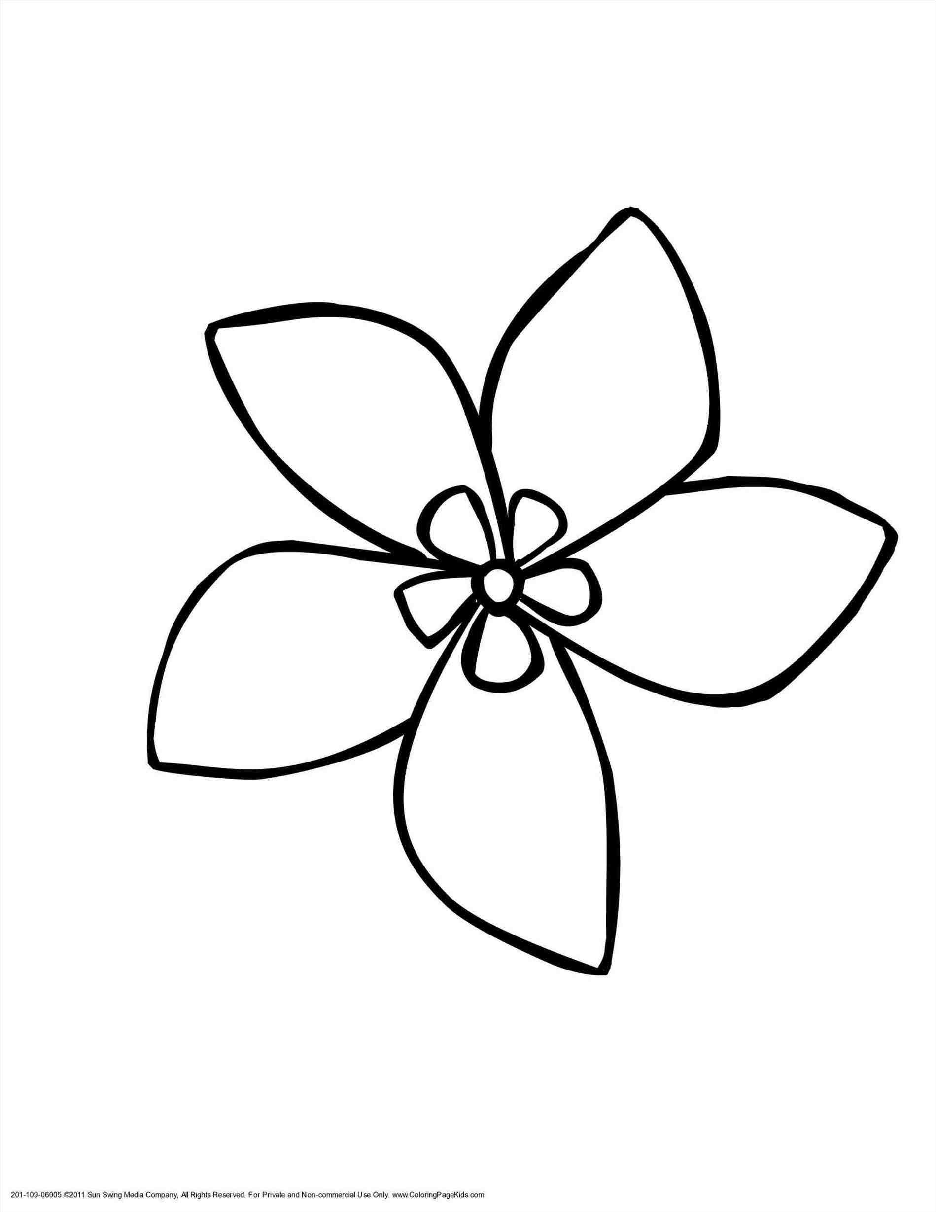1899x2459 Edelweiss Drawing 95730 Baidata