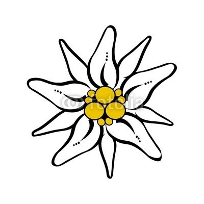 400x400 Edelweiss Flower Drawing Free Vector Download Tattoo Ideas
