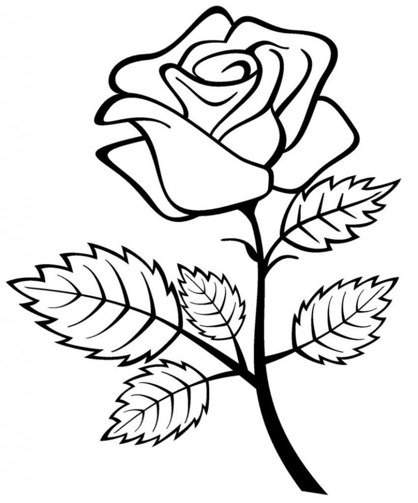 851x1024 Edelweiss Flower Drawing Silhouette Edelweiss Flower Symbol