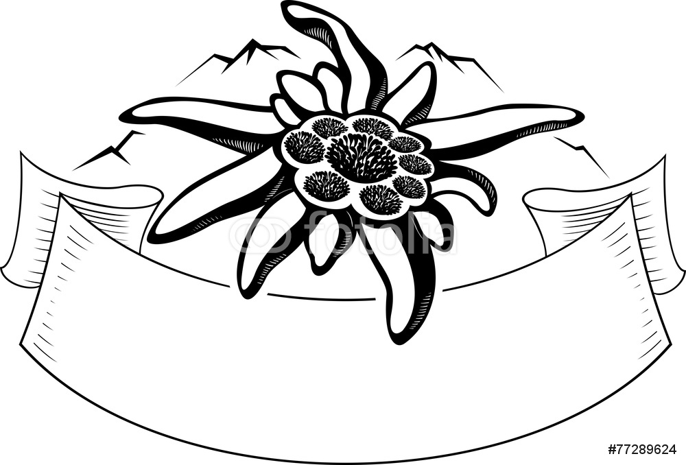 1000x678 Edelweiss Flower The Symbol Of Alpinism Mountain Logo Wall Sticker