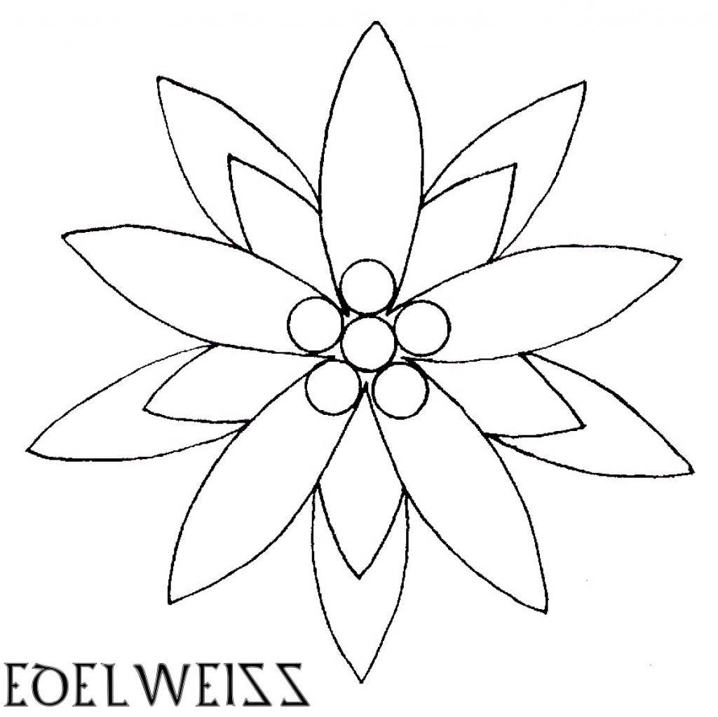 1024x1023 Edelweiss Flowers Drawing Edelweiss Flower Drawing