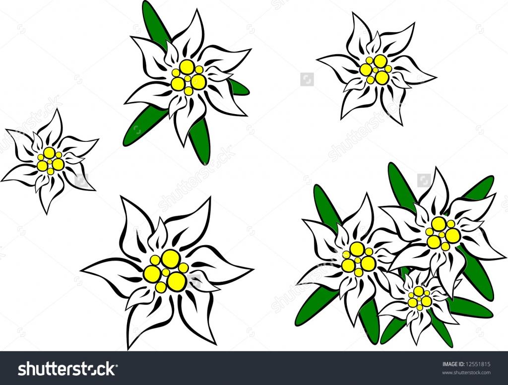 1024x776 Edelweiss Flowers Drawing Edelweiss Flower Drawing Edelweiss
