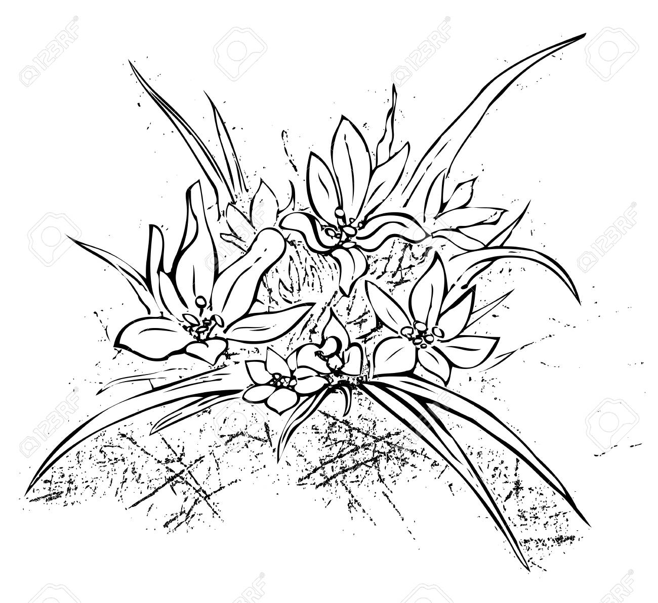 1300x1193 Edelweiss Simple Hand Drawn Illustration. Royalty Free Cliparts