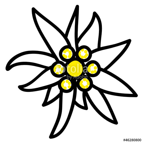 500x500 Edelweiss Stock Image And Royalty Free Vector Files On Fotolia