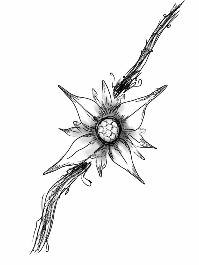 768x1024 Edelweiss Tattoo Design 1 By ~davwin On Tattoo Ideas