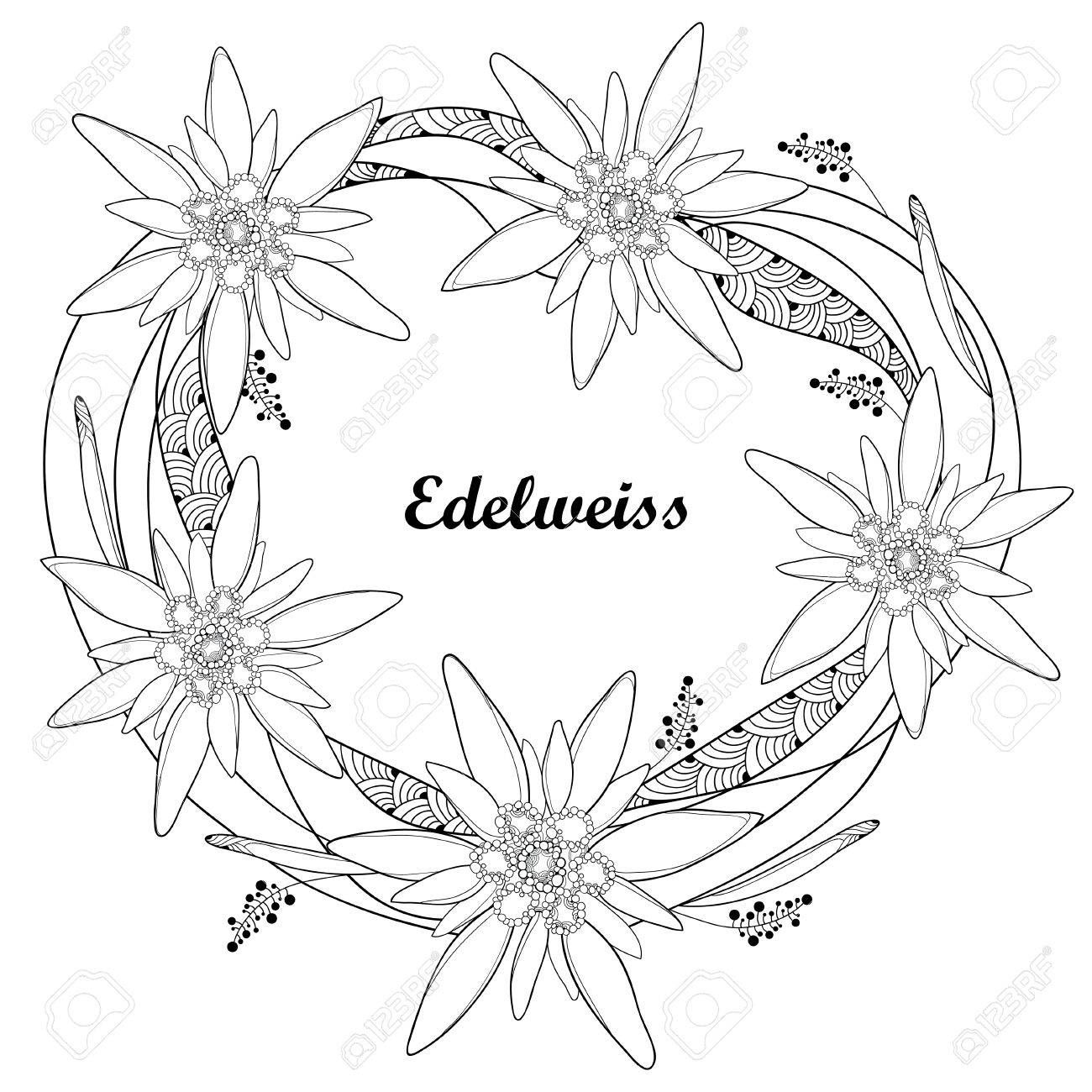 1300x1300 Ornate Round Wreath With Outline Edelweiss Or Leontopodium Alpinum
