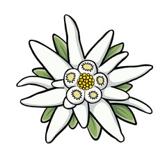 240x240 Search Photos Edelweiss
