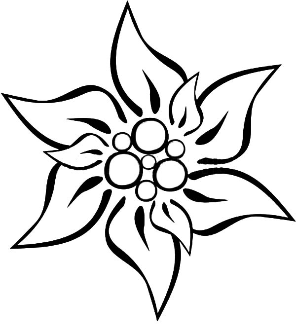 600x681 Edelweiss Flower Coloring Page