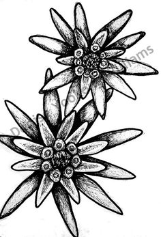 236x347 Clipart Edelweiss Kostenlos Collection