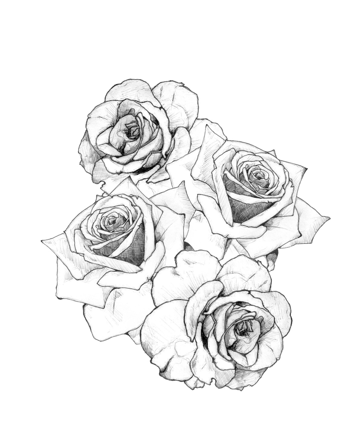 1134x1417 Collection Of Free Banner And Rose Tattoo Design