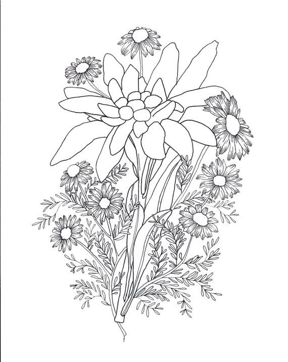 570x716 Edelweiss Amp Chamomile Tattoo Sketch Beauty Etsy Collections