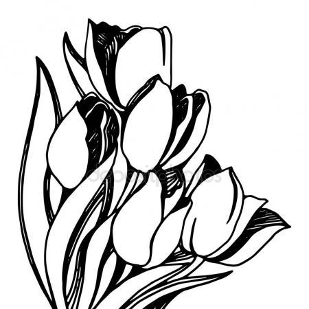450x450 Edelweiss Flower Vector Stock Vector Miceking