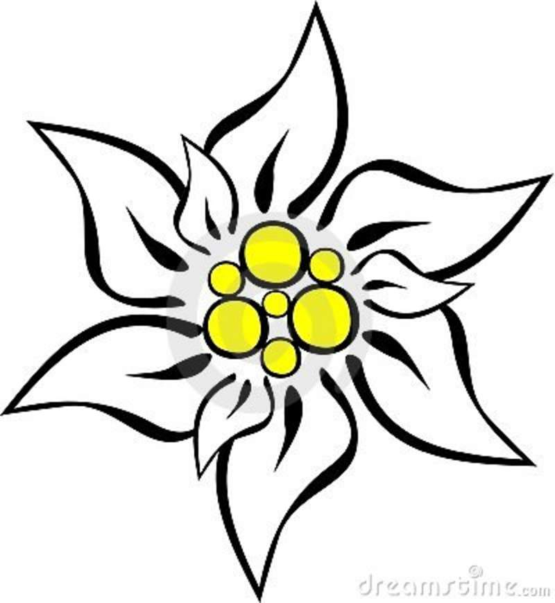 800x870 Edelweiss Tattoo Inspiration. For My Mom Because She Sang Me That