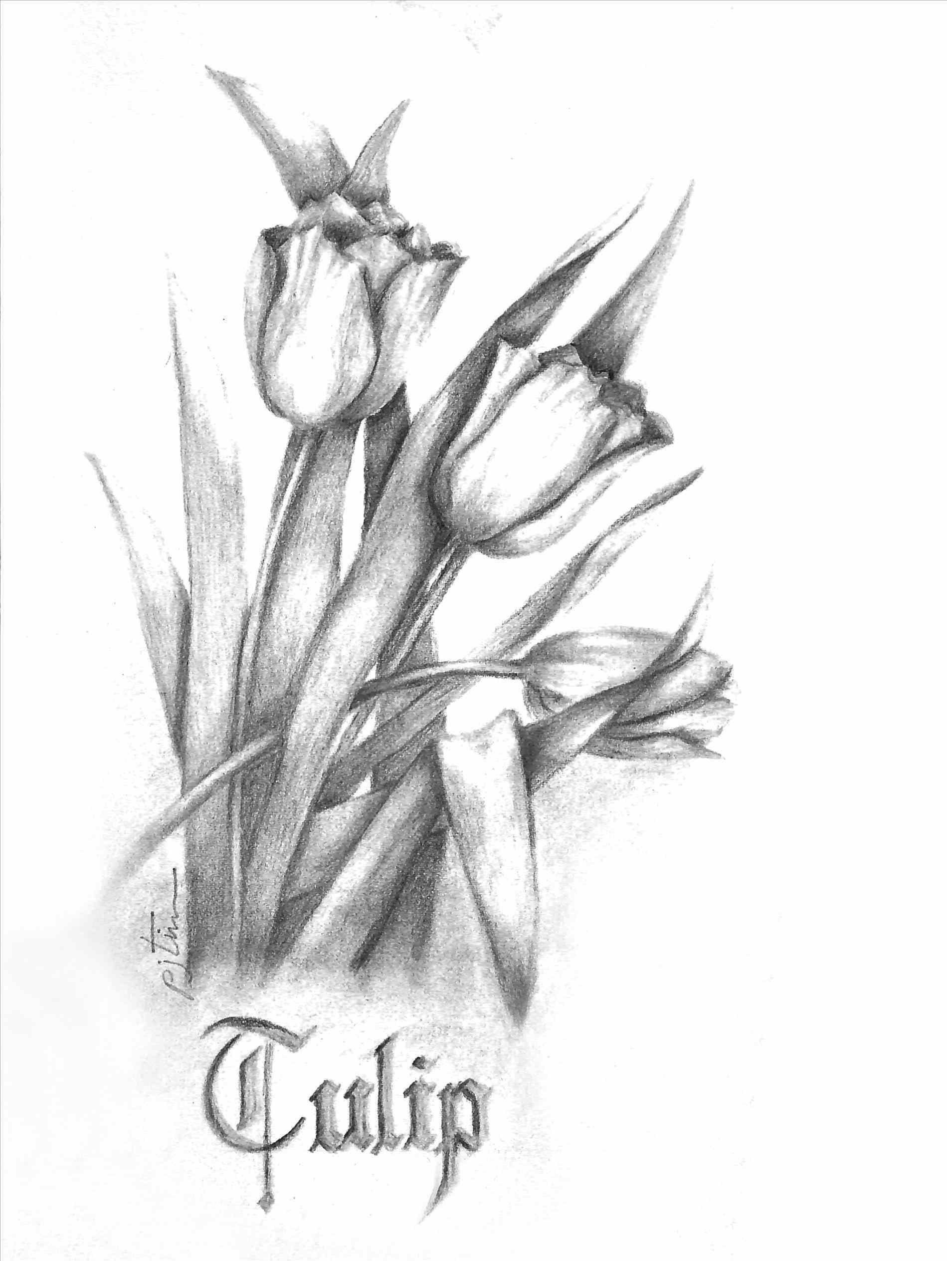 1899x2527 Rare Flowers Drawings