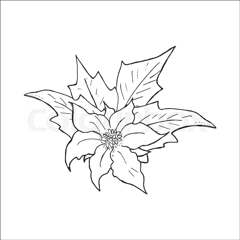 800x800 Poinsettia Flower Hand Drawn Icon, Outline Sketch Doodle. Vector
