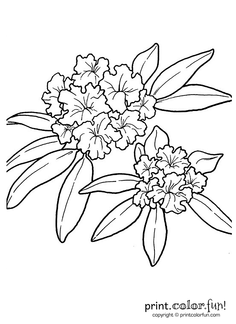 800x1100 Rhododendron Flower Coloring Page