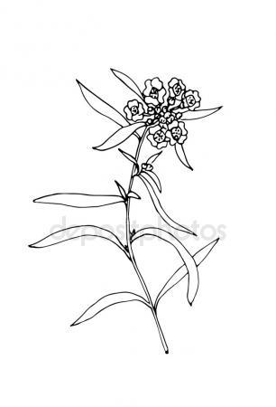 306x450 Sketch Cornflower Illustration Stock Vector Ausheka9