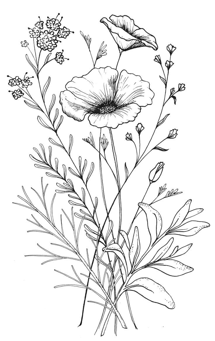736x1163 All Types Of Flowers Drawings