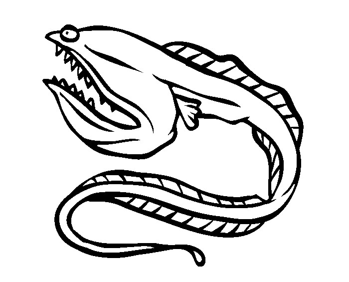 Eel Drawing