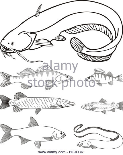 429x540 Eel Hooks Stock Photos Amp Eel Hooks Stock Images