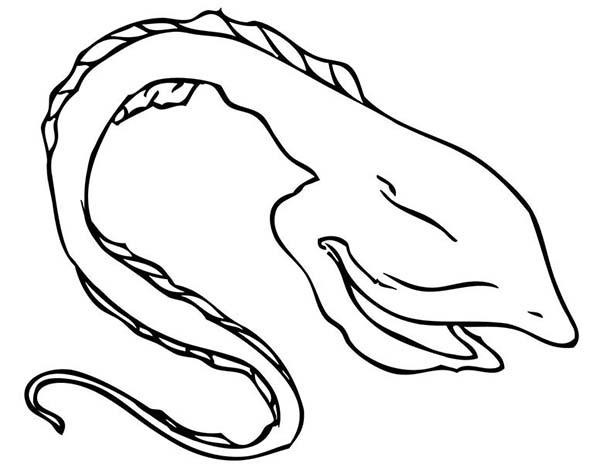 600x464 Gulper Eel Coloring Page Color Luna