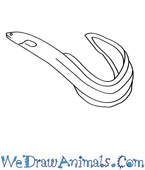300x350 How To Draw An American Eel