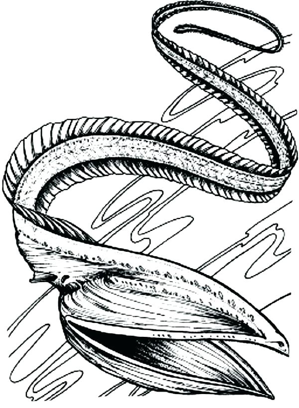 600x820 Eel Coloring Page Eel Black And White 1 Gulper Eel Coloring Page