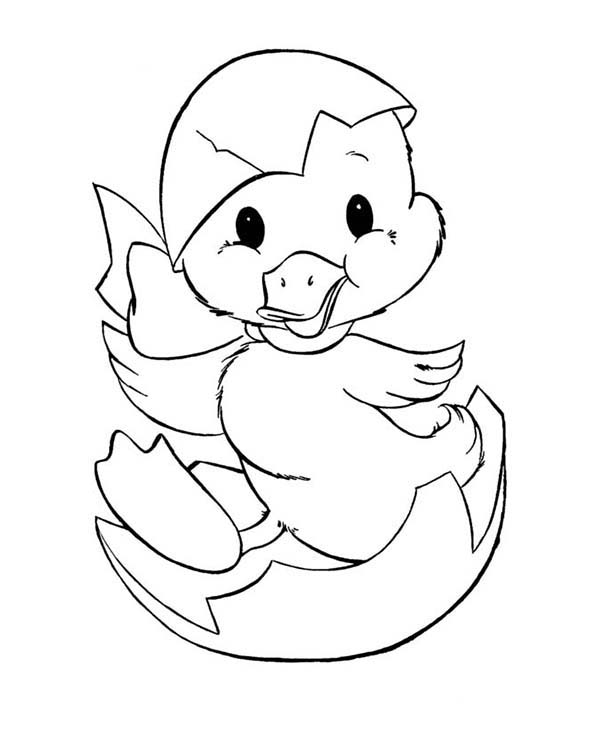 600x734 Duckling Just Hatching From Egg Coloring Page