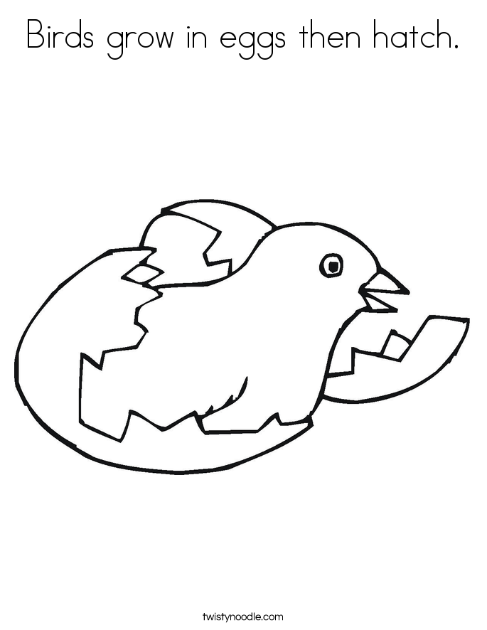 685x886 Birds Grow In Eggs Then Hatch Coloring Page