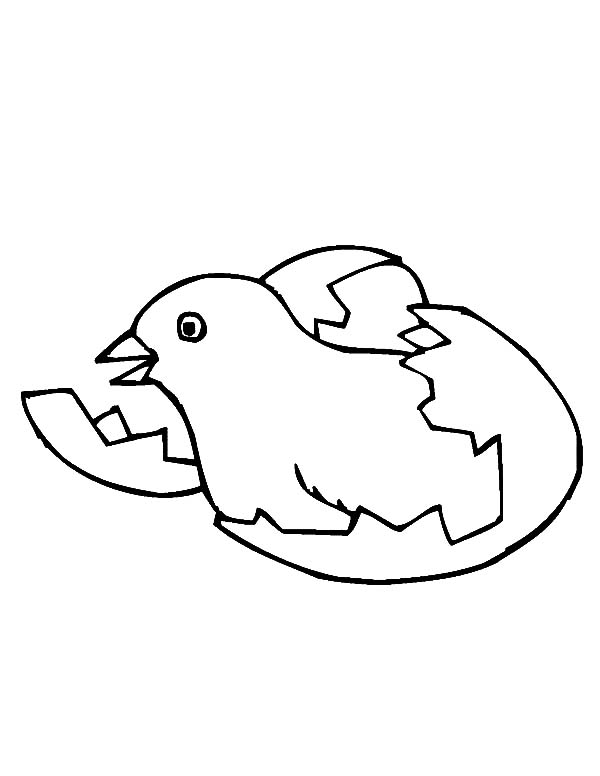 600x776 Chick Hatching From Egg Coloring Pages Best Place To Color