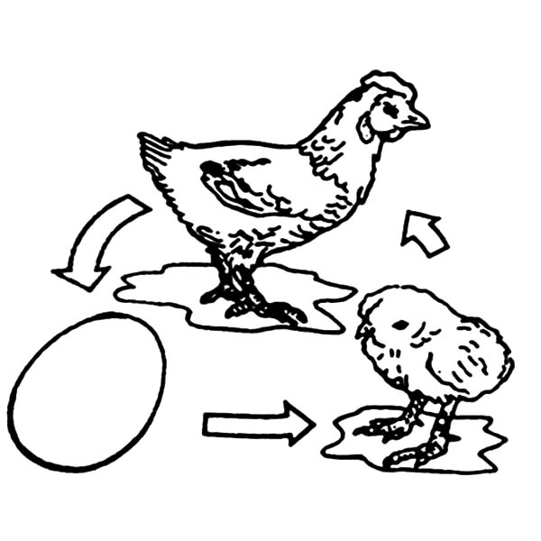 600x600 Hatch Coloring Pages