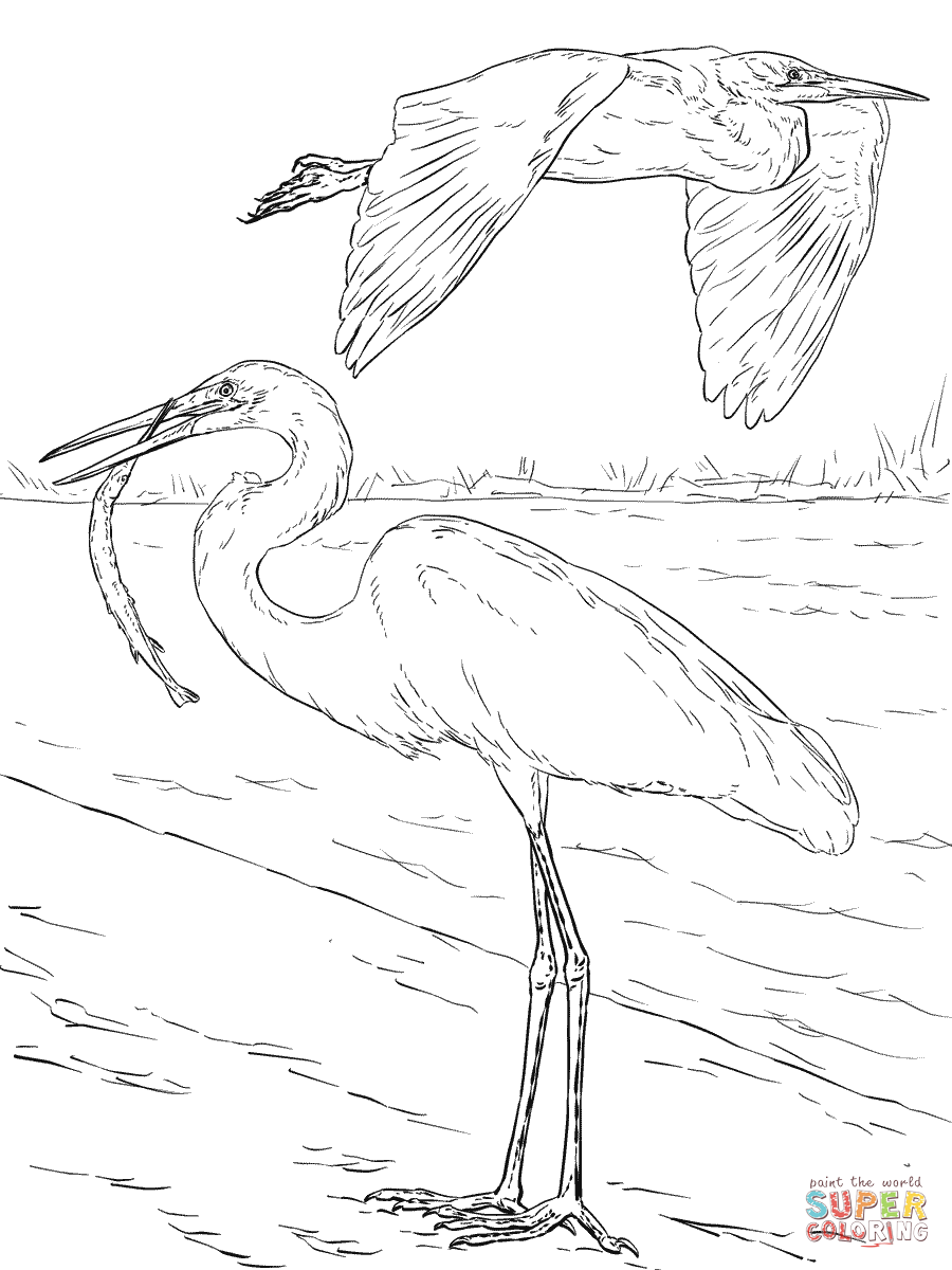 900x1200 Egrets Coloring Pages Free