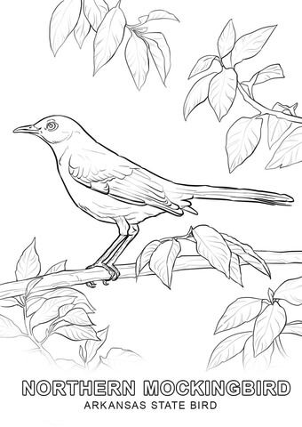 340x480 Arkansas State Bird Coloring Page Free Printable Coloring Pages