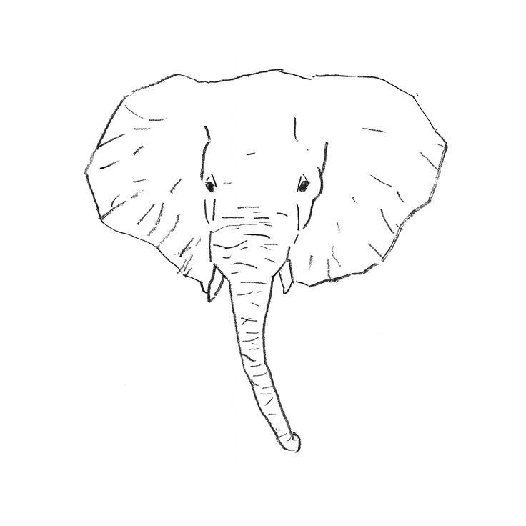 736x736 21 best Elephant skeleton images on Pinterest Elephants