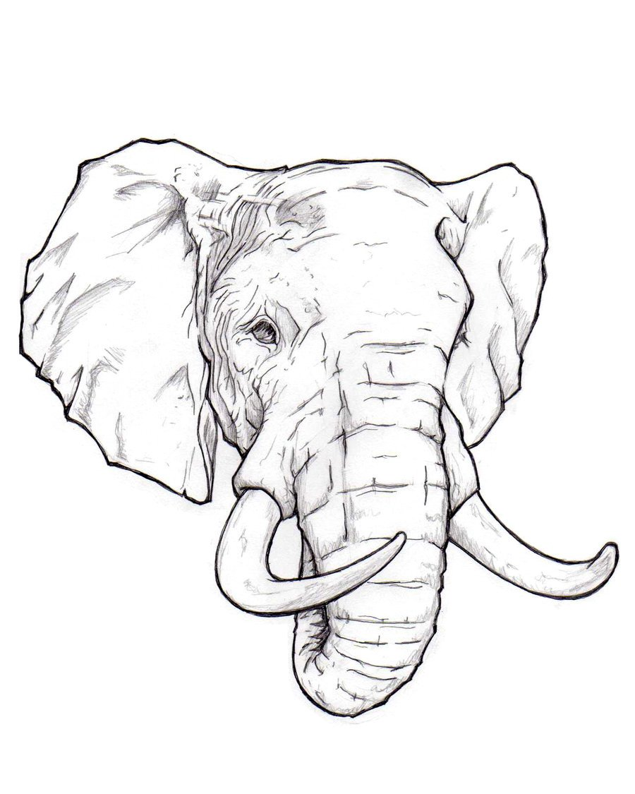 900x1125 How to draw an elephant head step by step easy for beginners video